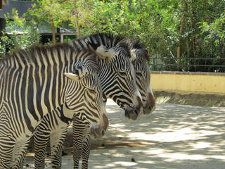 Jardim Zoológico de Lisboa © JorgeBRAZIL