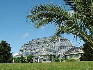 Das Große Tropenhaus im Botanischen Garten Berlin. © I. Haas, Botanischer Garten und Botanisches Museum Berlin-Dahlem