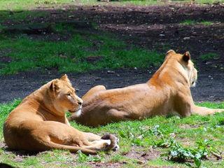 Burgers Zoo bei Arnheim in den Niederlanden