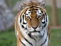 Marwell Zoological Park © Marwell Zoological Park