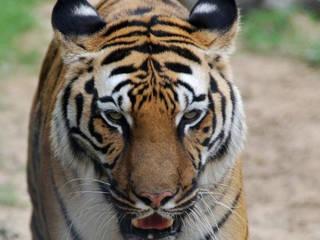 Palic Zoo © Palic Zoo
