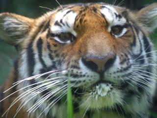 © Brandywine Zoo