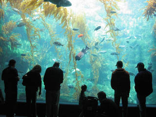 Das Birch Aquarium at Scripps in San Diego, Kalifornien © Jessica Crawford